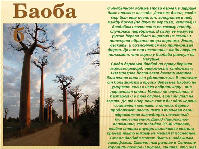 О необычном облике этого дерева в Африке даже сложена легенда. Давным-давно,...
