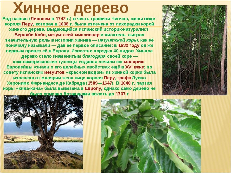 Хинное дерево Род назван (Линнеемв1742г.) в честь графини Чинчон, жены виц...