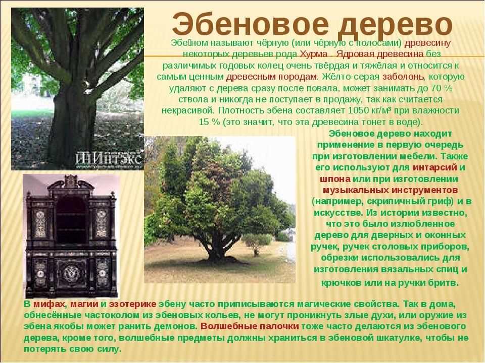 Эбеновое дерево Эбе́ном называют чёрную (или чёрную с полосами)древесинунек...