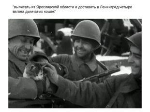 """""""выписать из Ярославской области и доставить в Ленинград четыре вагона дымчат"""