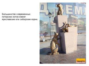 Большинство современных питерских котов имеют ярославские или сибирские корни.