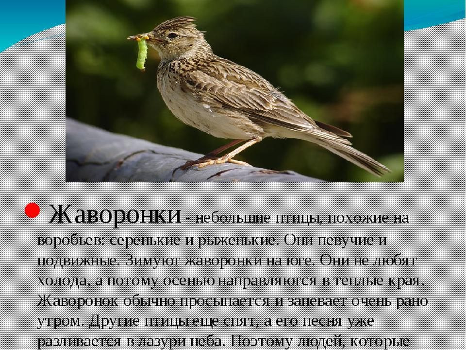 них птицы самарской области фото и названия оказалось, этой социальной