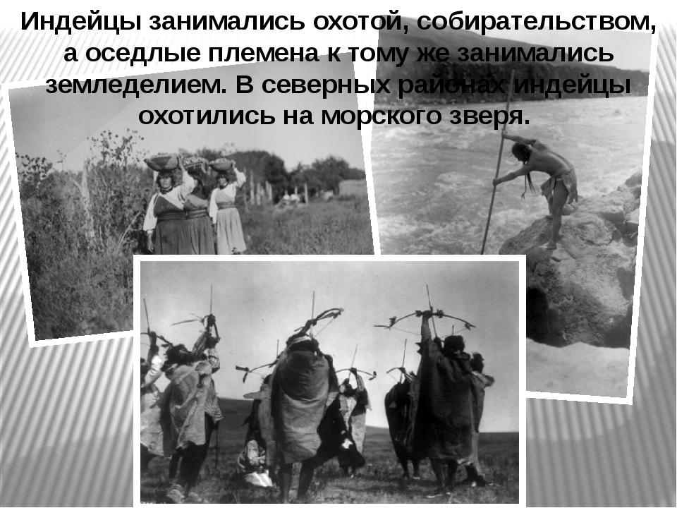 Индейцы занимались охотой, собирательством, а оседлые племена к тому же заним...