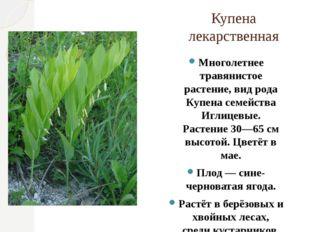 Купена лекарственная Многолетнее травянистое растение, вид рода Купена семейс