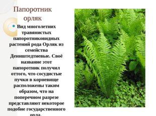 Папоротник орляк Вид многолетних травянистых папоротниковидных растений рода
