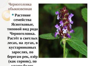 Черноголовка обыкновенная Растение семейства Яснотковые, типовой вид рода Чер