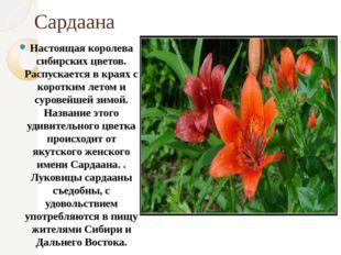 Сардаана Настоящая королева сибирских цветов. Распускается в краях с коротким