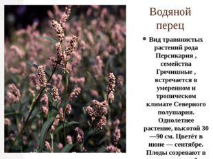 Водяной перец Вид травянистых растений рода Персикария , семейства Гречишные