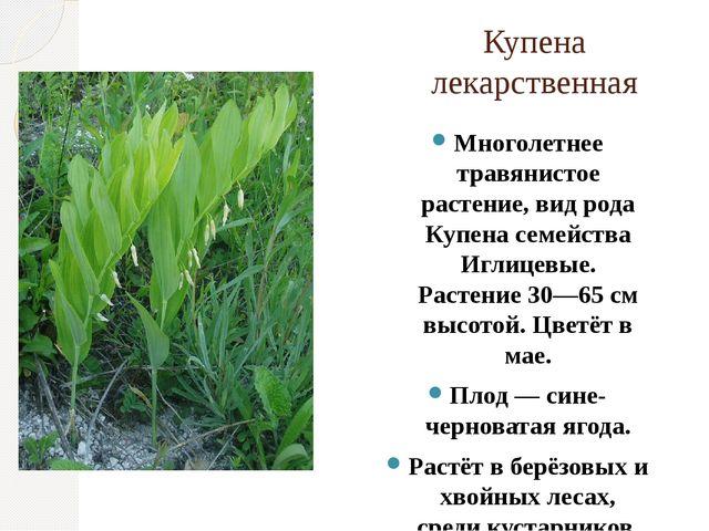 Купена лекарственная Многолетнее травянистое растение, вид рода Купена семейс...