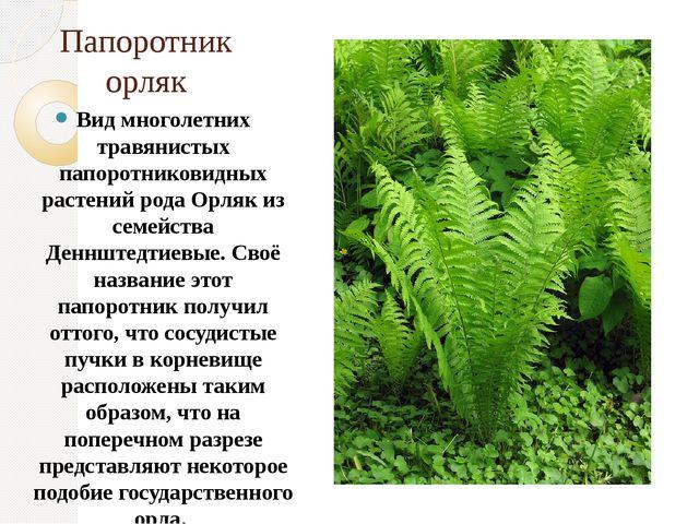 Папоротник орляк Вид многолетних травянистых папоротниковидных растений рода...