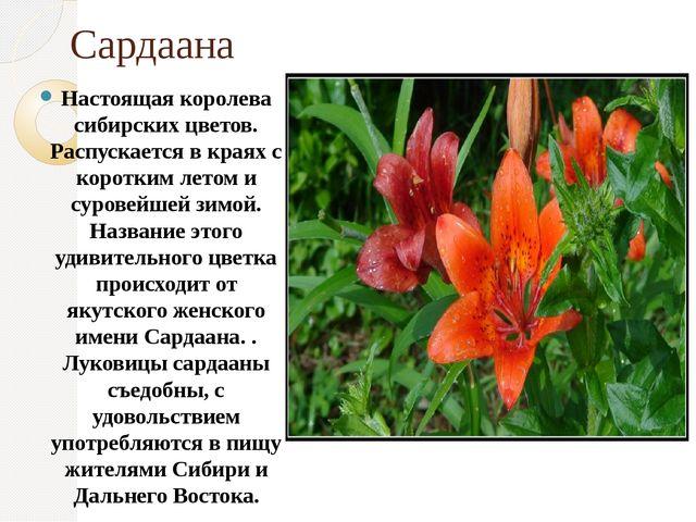 Сардаана Настоящая королева сибирских цветов. Распускается в краях с коротким...