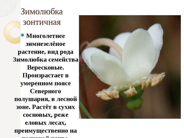 Зимолюбка зонтичная Многолетнее зимнезелёное растение, вид рода Зимолюбка сем...