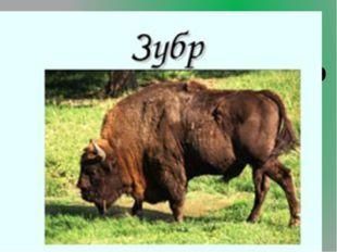 4.Какое крупное животное, массивного и тяжёлого сложения, жизнь которого связ
