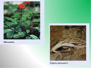 6.Какое из растений, занесено в Красную книгу? Название его в переводе с кита