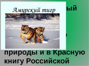 9.Самый северный тигр. Занесён в Красную книгу Международного союза охраны п