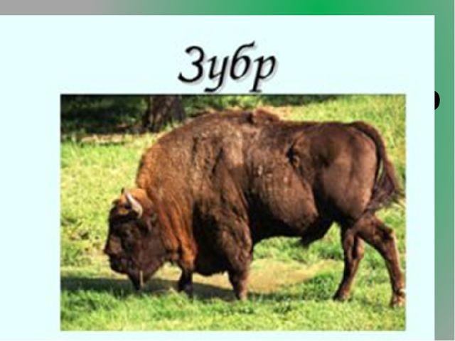 4.Какое крупное животное, массивного и тяжёлого сложения, жизнь которого связ...
