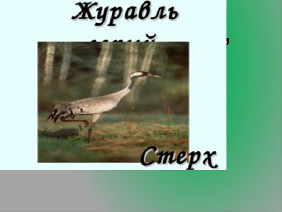 8.Белый журавль, внесённый в Международную Красную книгу.