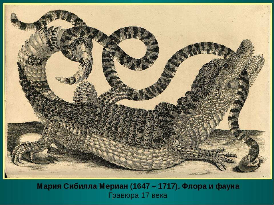 Мария Сибилла Мериан (1647 – 1717). Флора и фауна Гравюра 17 века