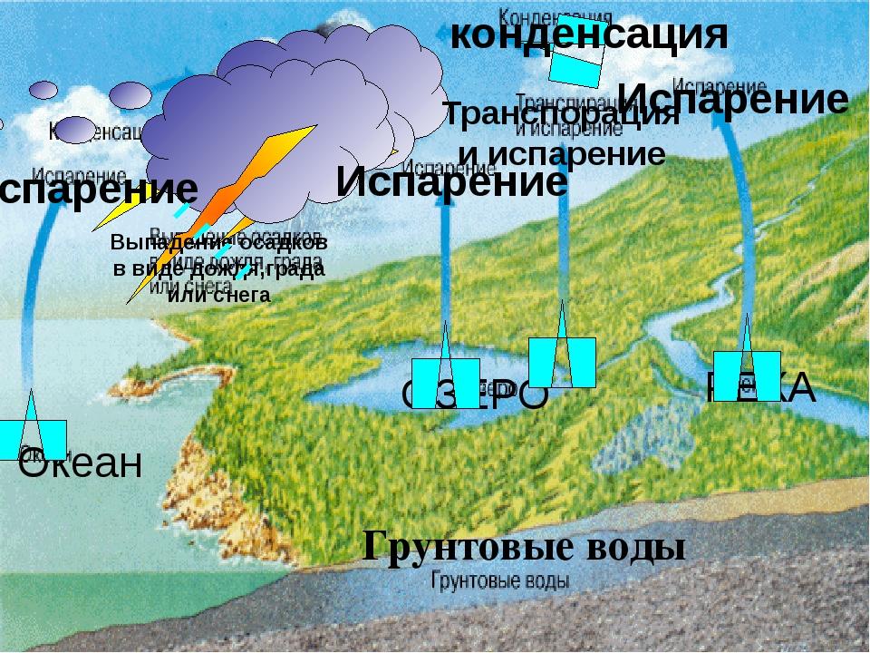 конденсация Океан ОЗЕРО РЕКА Грунтовые воды Испарение Транспорация и испарени...