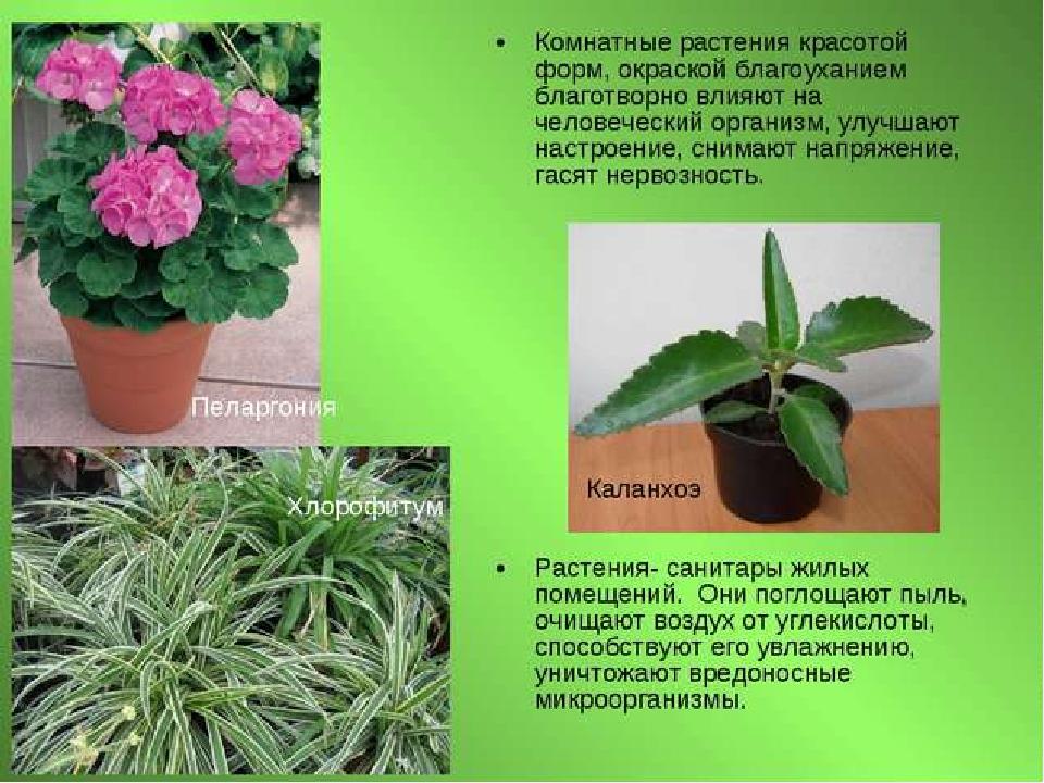 Комнатные растения для красоты