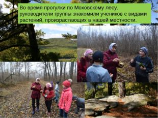 Во время прогулки по Моховскому лесу, руководители группы знакомили учеников