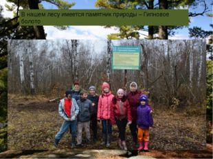 В нашем лесу имеется памятник природы – Гипновое болото