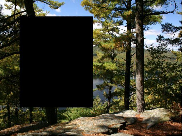 Отчёт о поездке членов «Школьного лесничества» в лес