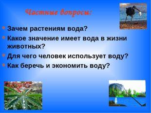 Частные вопросы: Зачем растениям вода? Какое значение имеет вода в жизни жив
