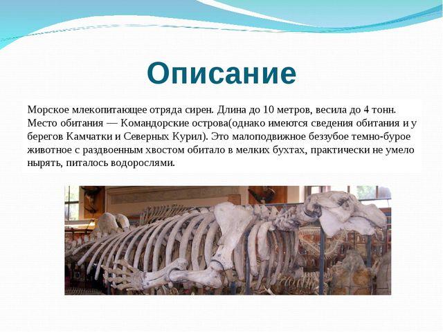 Описание Морское млекопитающее отряда сирен. Длина до 10 метров, весила до 4...