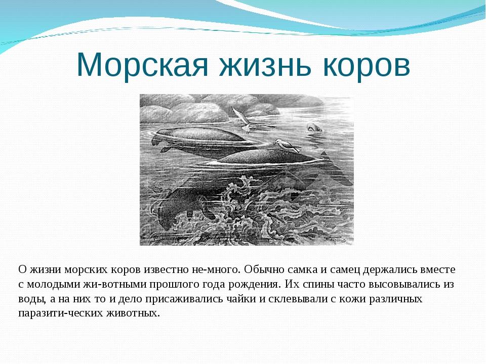Морская жизнь коров О жизни морских коров известно немного. Обычно самка и с...