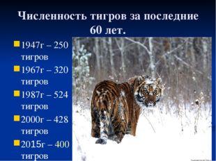 Численность тигров за последние 60 лет. 1947г – 250 тигров 1967г – 320 тигров