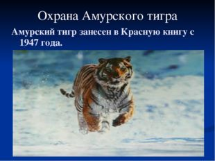 Охрана Амурского тигра Амурский тигр занесен в Красную книгу с 1947 года.