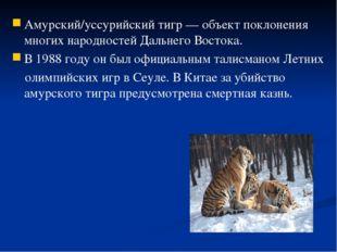 Амурский/уссурийский тигр — объект поклонения многих народностей Дальнего Вос