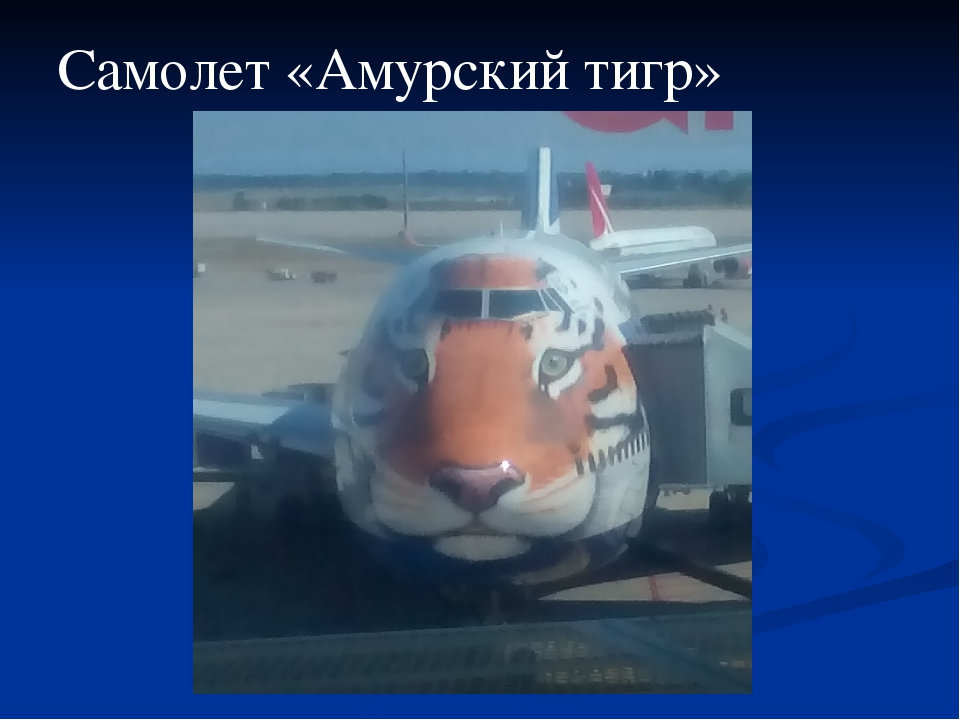 Самолет «Амурский тигр»