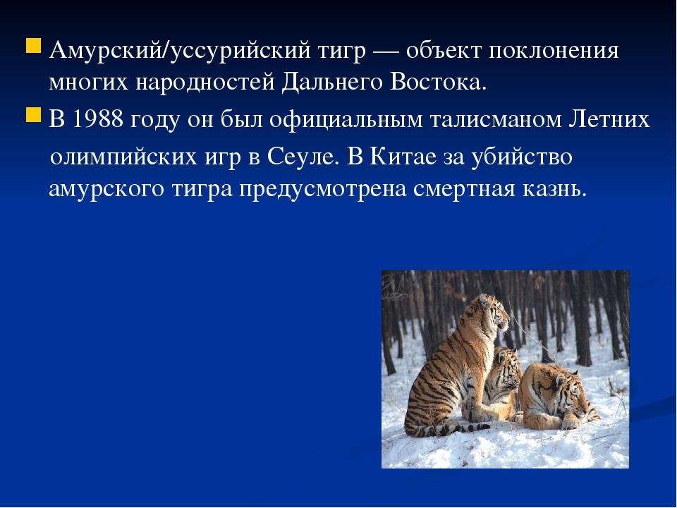 Амурский/уссурийский тигр — объект поклонения многих народностей Дальнего Вос...