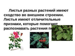 Листья разных растений имеют сходство во внешнем строении. Листья имеют отли