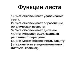 Функции листа 1) Лист обеспечивает улавливание света. 2) Лист обеспечивает об