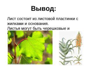 Вывод: Лист состоит из листовой пластинки с жилками и основания. Листья могут