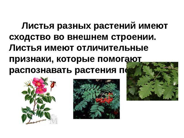 Листья разных растений имеют сходство во внешнем строении. Листья имеют отли...