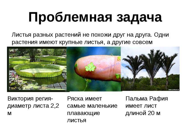 Проблемная задача Листья разных растений не похожи друг на друга. Одни растен...
