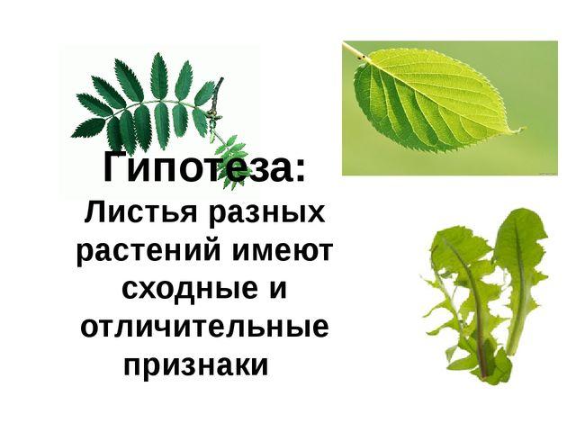 Гипотеза: Листья разных растений имеют сходные и отличительные признаки