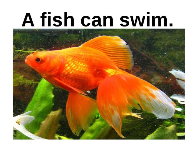 A fish can swim.