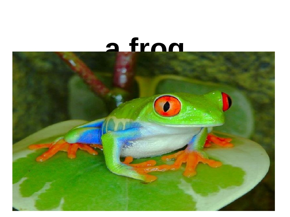 a frog