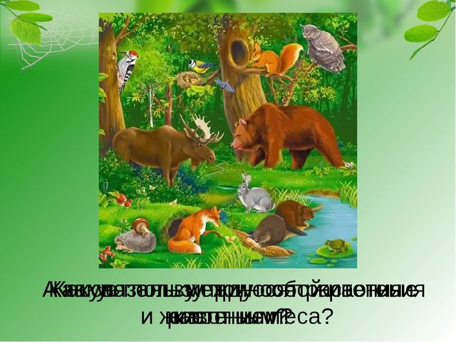Как связаны между собой растения и животные леса? Какую пользу приносят расте...