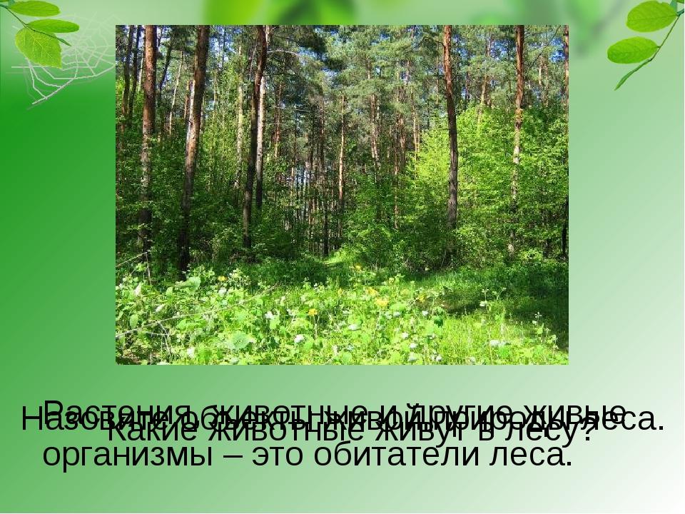 Назовите объекты живой природы леса. Растения, животные и другие живые органи...
