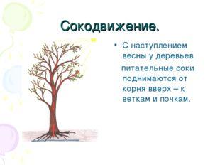 Сокодвижение. С наступлением весны у деревьев питательные соки поднимаются от