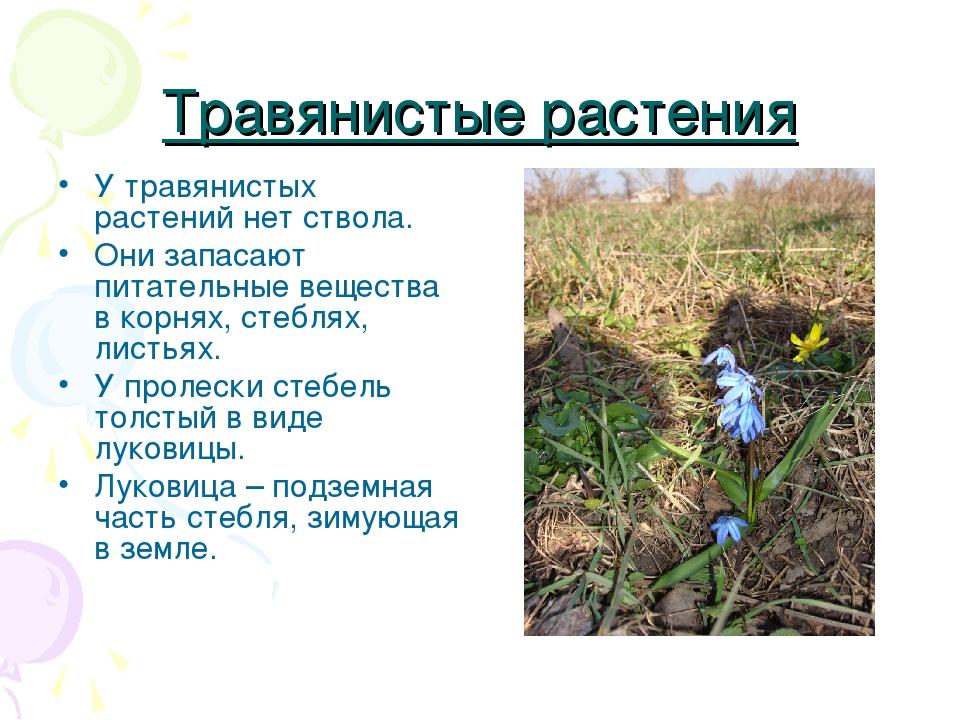 Травянистые растения У травянистых растений нет ствола. Они запасают питатель...