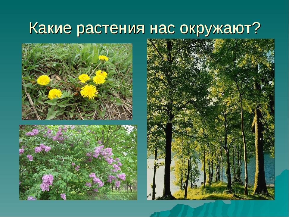 Какие растения нас окружают?