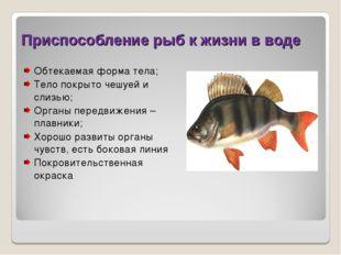 Приспособление рыб к жизни в воде Обтекаемая форма тела; Тело покрыто чешуей