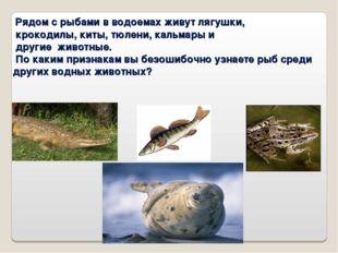 Рядом с рыбами в водоемах живут лягушки, крокодилы, киты, тюлени, кальмары и